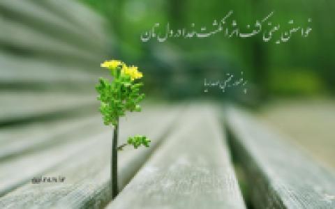 عکس شاعر سیده فاطمه جعفرزاده رحمتی