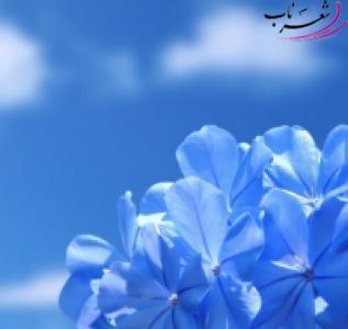 عکس شاعر علی   صادقی