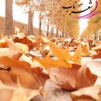 عکس شاعر  فرهاد رضایی