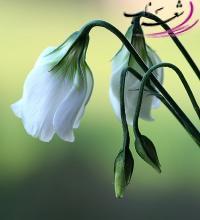 عکس شاعر سایه سیرنگ