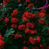 بخوان به نام گل سرخ 🌹